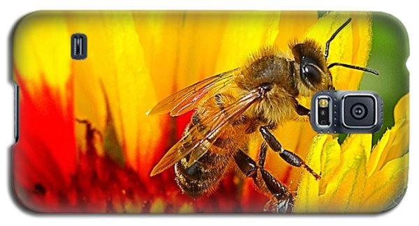 Beezy Bee Galaxy S5 Case by Nick Kloepping