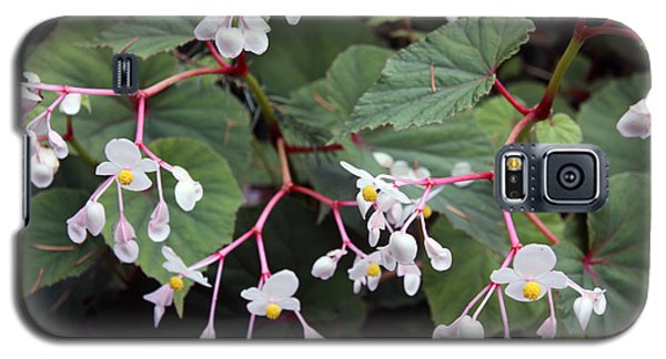 Galaxy S5 Case featuring the photograph Begonia Olsoniae by Gerry Bates