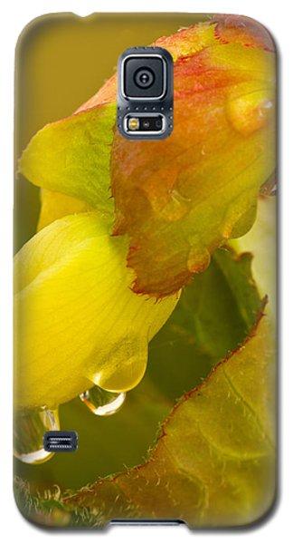 Begonia Raindrops  Galaxy S5 Case