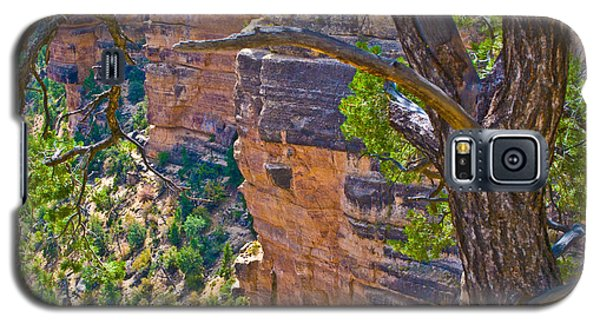 Behind The Tree Grand Canyon Lan163 Galaxy S5 Case by G L Sarti