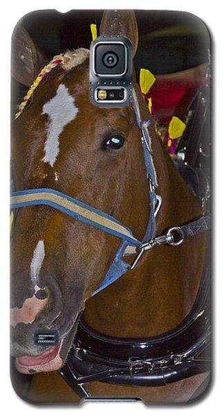 Belgian Draft Horse Galaxy S5 Case by Bill Woodstock