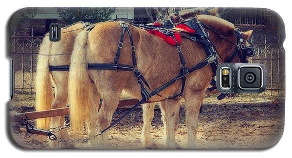 Belgium Draft Horses Galaxy S5 Case