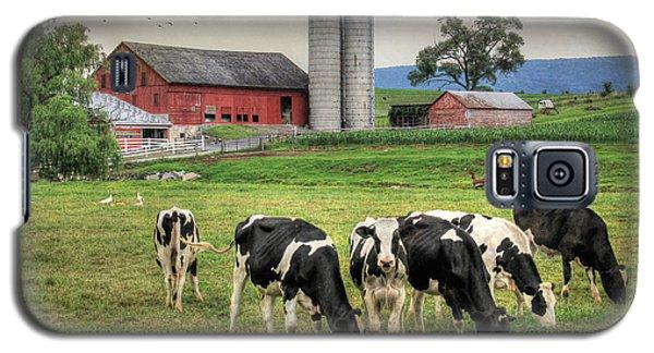 Belleville Cows Galaxy S5 Case