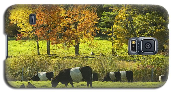 Belted Galloway Cows Grazing On Grass In Rockport Farm Fall Maine Photograph Galaxy S5 Case by Keith Webber Jr