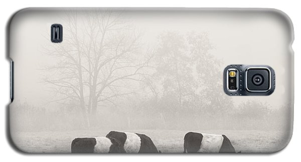Belted Galloway Cows On Foggy Farm Field In Maine Galaxy S5 Case