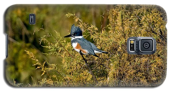 Belted Kingfisher Female Galaxy S5 Case by Anthony Mercieca