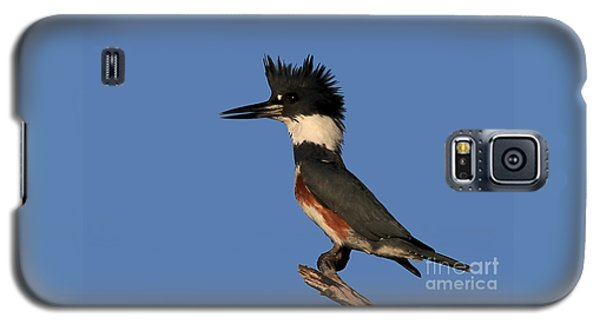 Belted Kingfisher Galaxy S5 Case