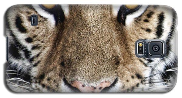 Bengal Tiger Eyes Galaxy S5 Case by Tom Mc Nemar