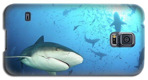 Nurse Shark Galaxy S5 Case - Beqa Shark Labs by Alexander Safonov