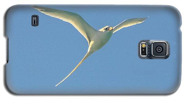 Bermuda Longtail In Flight Galaxy S5 Case