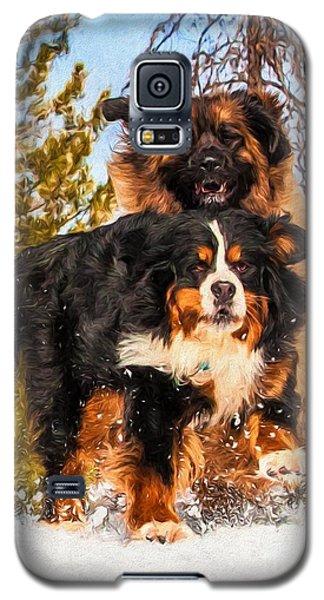 Bernese Mountain Dog And Leonberger Winter Fun Galaxy S5 Case