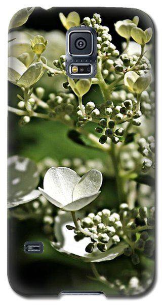 Berries And Blooms In Monochromatic Green Galaxy S5 Case