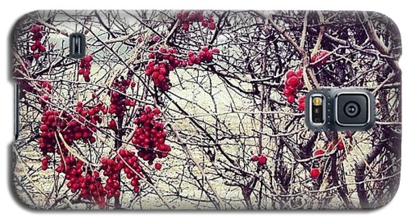 Bright Galaxy S5 Case - Berries In The Hedgerow by Nic Squirrell