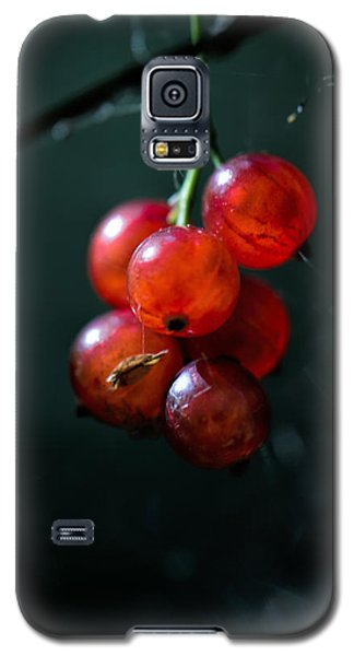 Berries Galaxy S5 Case
