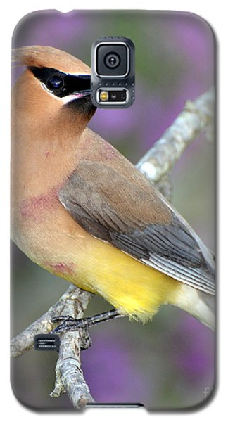 Berry Stained Waxwing Galaxy S5 Case by Stephen Flint