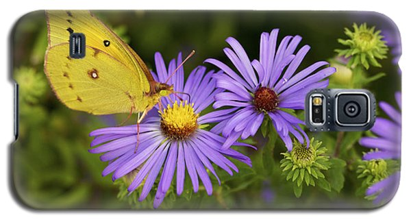 Galaxy S5 Case featuring the photograph Best Friends - Sulphur Butterfly On Asters by Jane Eleanor Nicholas