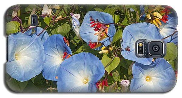 Bhubing Palace Gardens Morning Glory Dthcm0433 Galaxy S5 Case