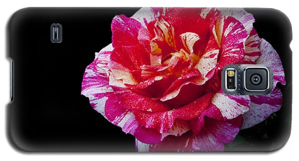 Galaxy S5 Case featuring the photograph Bicolour Beauty by Doug Norkum