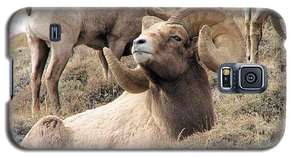 Big Bighorn Ram Galaxy S5 Case