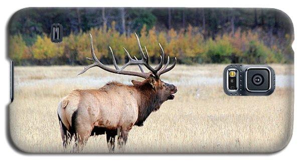 Big Colorado Bull Galaxy S5 Case
