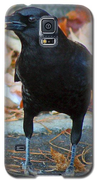 Big Daddy Crow Leaf Picker Galaxy S5 Case by Lesa Fine