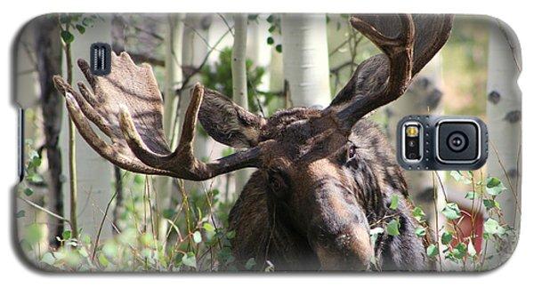 Big Daddy The Moose 3 Galaxy S5 Case