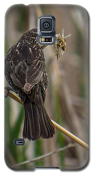 Big Dinner For Female Red Winged Blackbird II Galaxy S5 Case by Patti Deters
