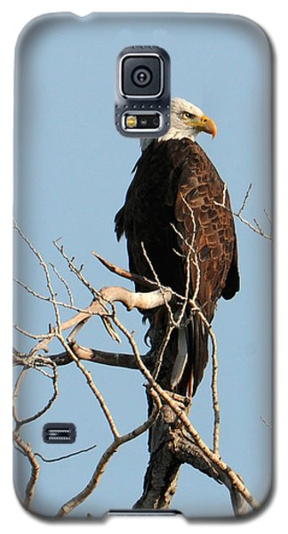 Big Horn Bald Eagle Galaxy S5 Case