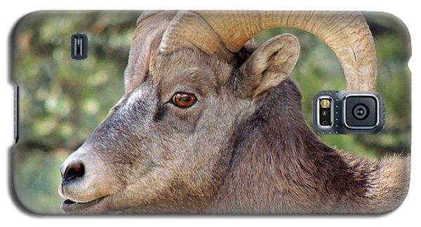 Galaxy S5 Case featuring the photograph Big Horn by Lynn Sprowl