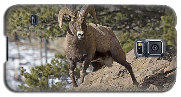 Big Horn Ram Galaxy S5 Case