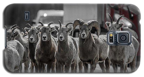 Big Horn Sheep Road Block Galaxy S5 Case