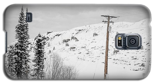Big Horn Sheep Hinton Hillside Galaxy S5 Case