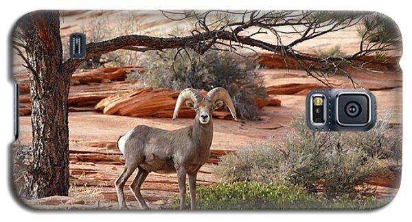 Big Horn Zion National Park Ut Galaxy S5 Case