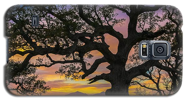 Big Oak Galaxy S5 Case