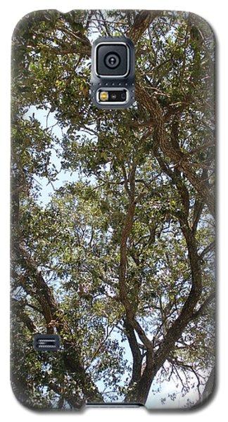 Big Oak Tree Galaxy S5 Case by Joseph Baril