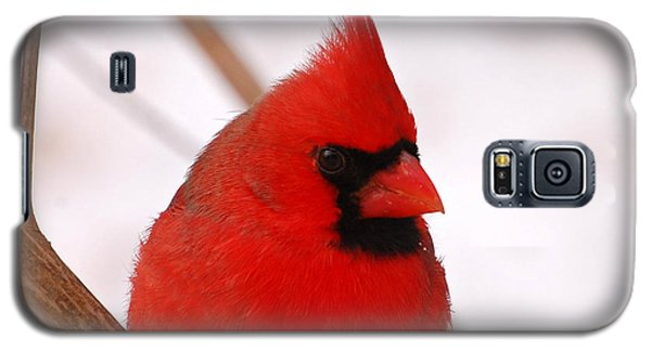 Galaxy S5 Case featuring the photograph Big Red  Cardinal Bird In Snow by Peggy Franz