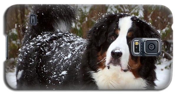 Snow Happy Galaxy S5 Case by Patti Whitten