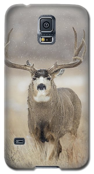 Big Sky On Snowy Day Galaxy S5 Case