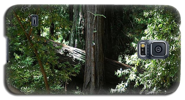 Big Sur Big Trees Galaxy S5 Case
