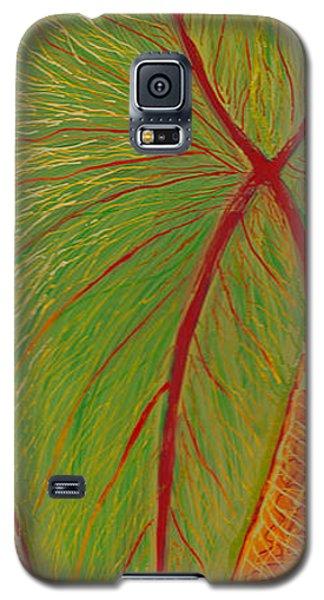 Big Taro Galaxy S5 Case