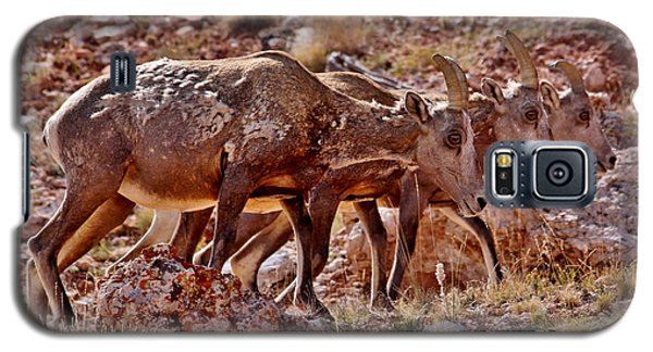 Galaxy S5 Case featuring the photograph Bighorn Canyon Sheep Trio by Janice Rae Pariza