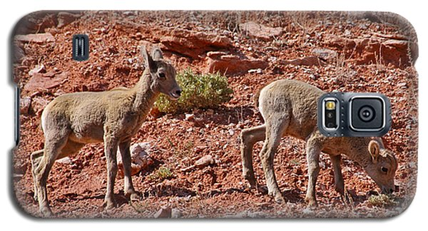 Galaxy S5 Case featuring the photograph Bighorn Canyon Sheep Wyoming by Janice Rae Pariza