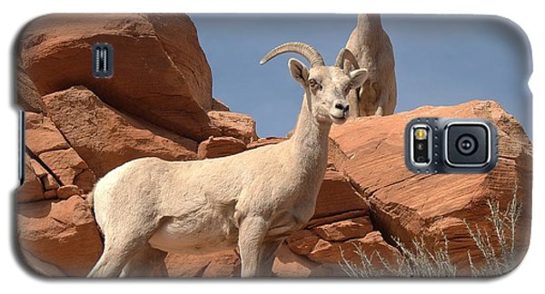 Galaxy S5 Case featuring the photograph Bighorn Ewes by Jeff Cook