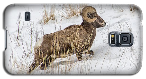 Bighorn In Yellowstone Galaxy S5 Case