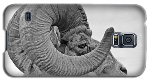 Galaxy S5 Case featuring the photograph Bighorn Mountain Sheep 2 by Dennis Cox WorldViews