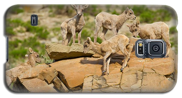 Galaxy S5 Case featuring the photograph Bighorn Playground by Aaron Whittemore