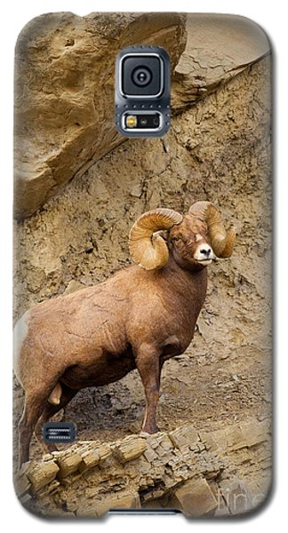 Galaxy S5 Case featuring the photograph Bighorn  by Aaron Whittemore