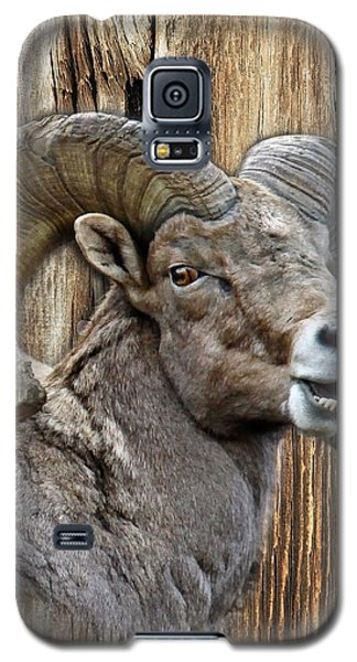 Bighorn Sheep Barnwood Galaxy S5 Case by Steve McKinzie