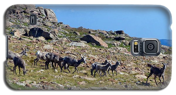 Bighorn Sheep Gang Female Galaxy S5 Case
