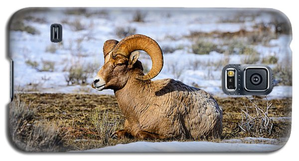 Galaxy S5 Case featuring the photograph Bighorn Sheep by Greg Norrell